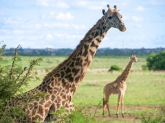 Best Wildlife Destinations to Visit in Kenya