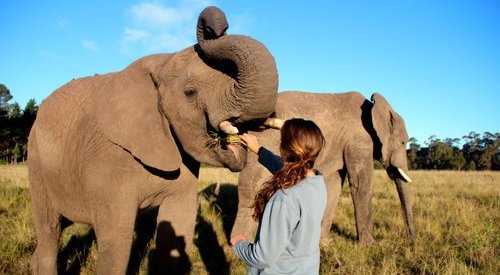 Volunteer with Animals Abroad