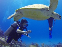 Scuba Dive in Indonesia