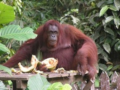 Gap Year in Borneo