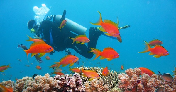 Scuba Diving in Colombia