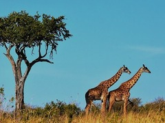 Tanzania Travel, Backpacking & Gap Year Guide