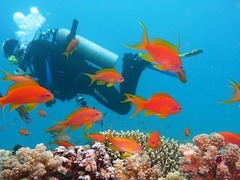 Scuba Diving in Europe & the Mediterranean