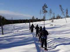 Finland Snowshoeing & Northern Lights Tour