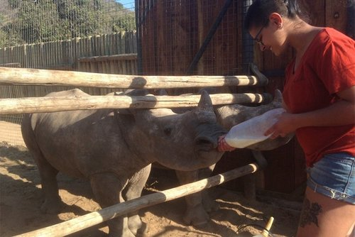 *NEW* Volunteer at South Africa's top rhino sanctuary
