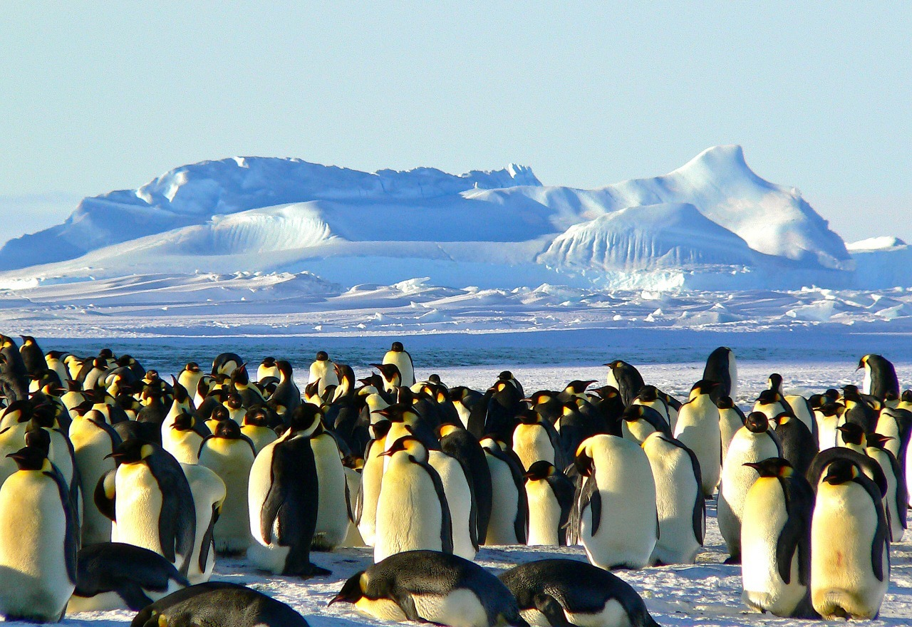 Things to Know Before Visiting Antarctica