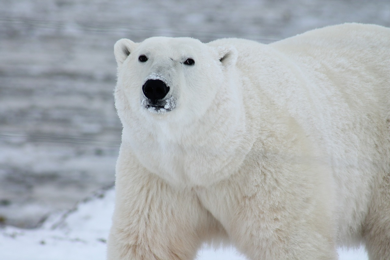 What Animals Can You See On a Trip to the Arctic