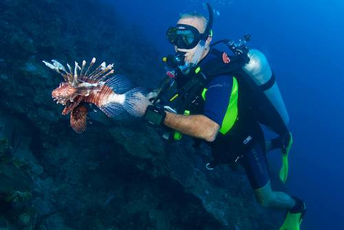 Underwater Revival: Scuba Diving and Marine Conservation