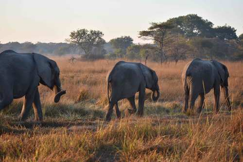 Volunteering in Zambia – Elephant Conservation in Kafue National Park