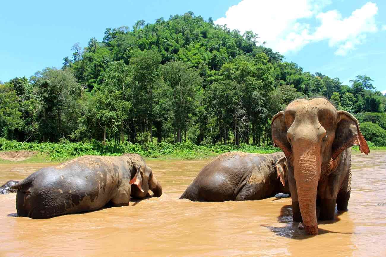 Ethical Elephant & Wildlife Sanctuaries in Thailand