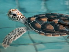 Thailand Coastal and Turtle Conservation