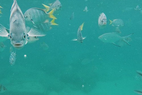 Island Conservation Expedition in Seychelles