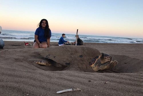 Sea Turtle Conservation in Greece