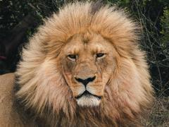 Wildlife Conservation Projects from £180 with PMGY
