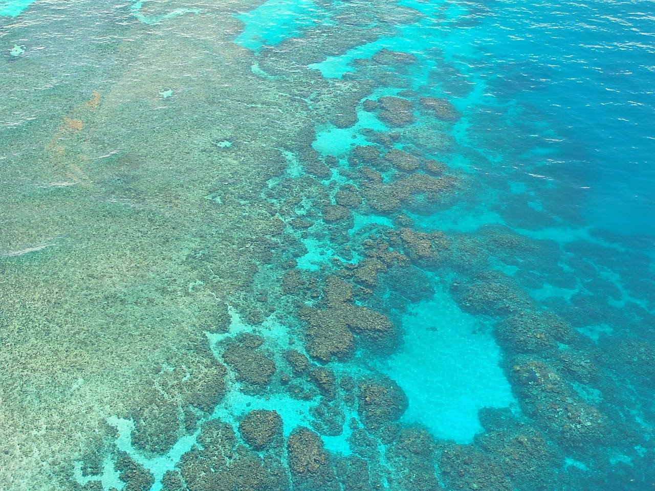 10 Reasons to Go Scuba Diving at the Great Barrier Reef