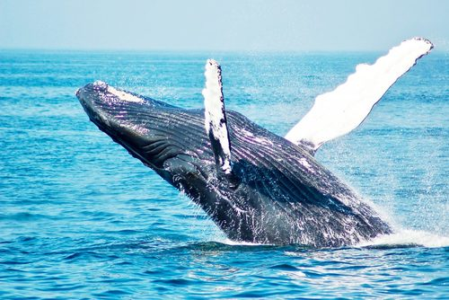 Tenerife Whale and Dolphin Conservation