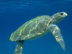 Sea Turtle Conservation Trip for Teens in Greece