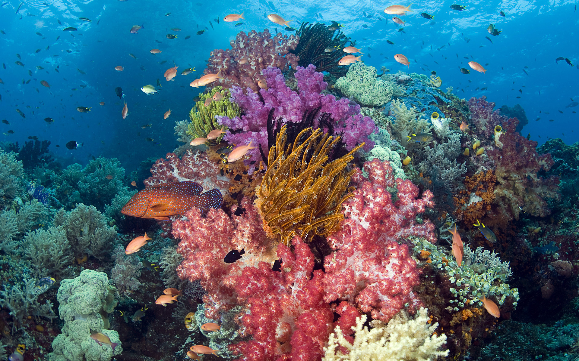 Cambodia Scuba Diving Packages