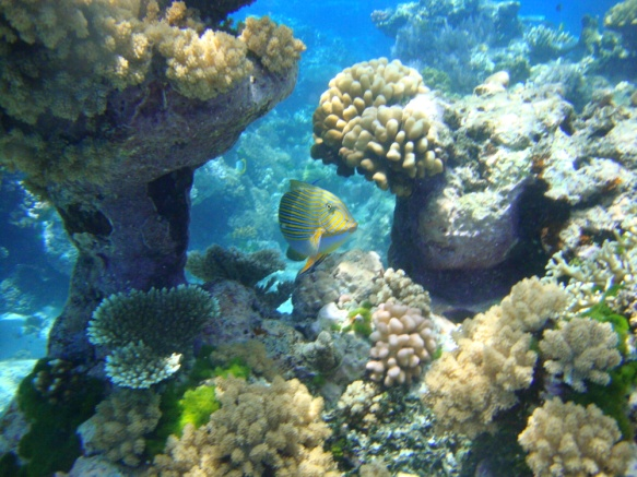 Great Barrier Reef Scuba Diving Australia 2