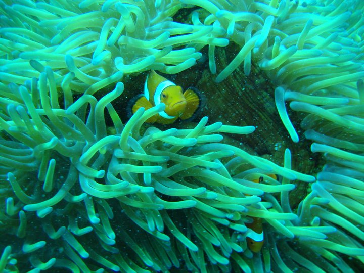 Great Barrier Reef Scuba Diving Australia 4