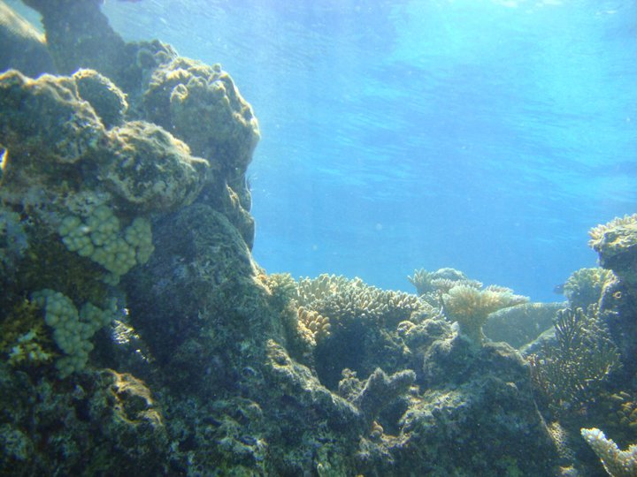 Great Barrier Reef Scuba Diving Australia 3
