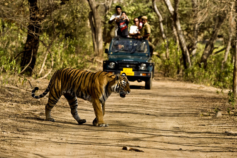 Jim Corbett National Park India
