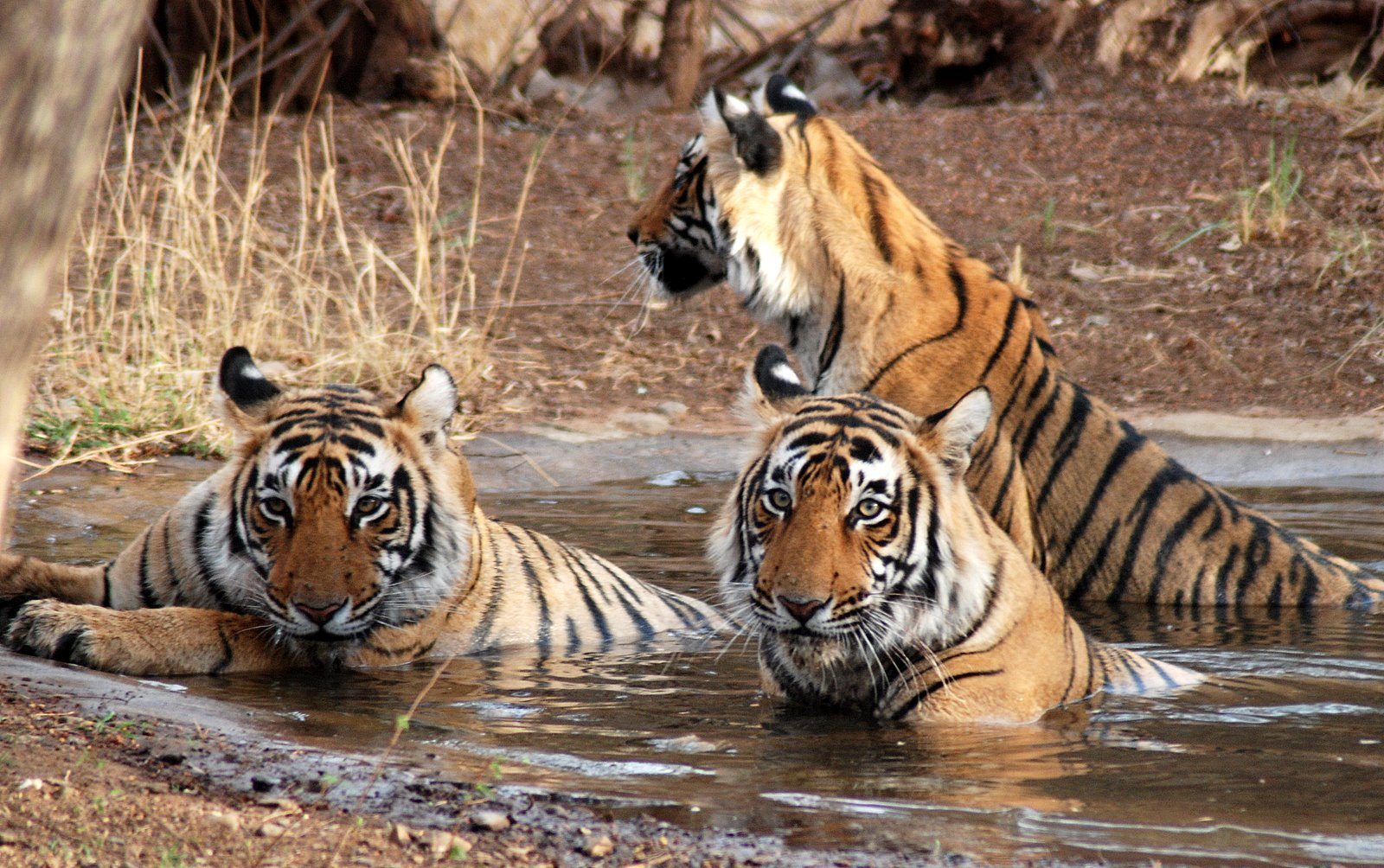 Ranthambore National Park Tiger Tours India