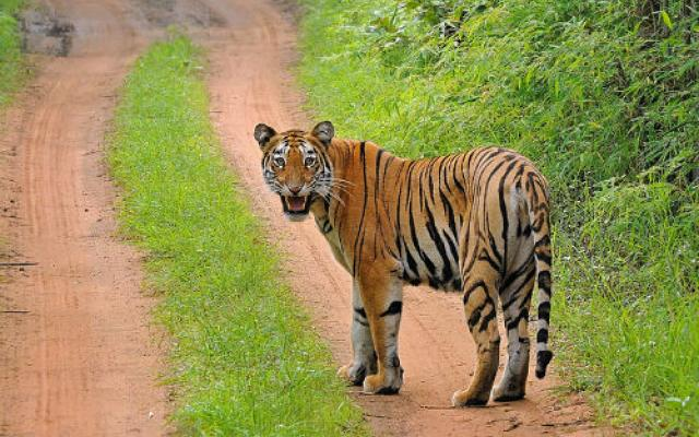 Tadoba National Park, India