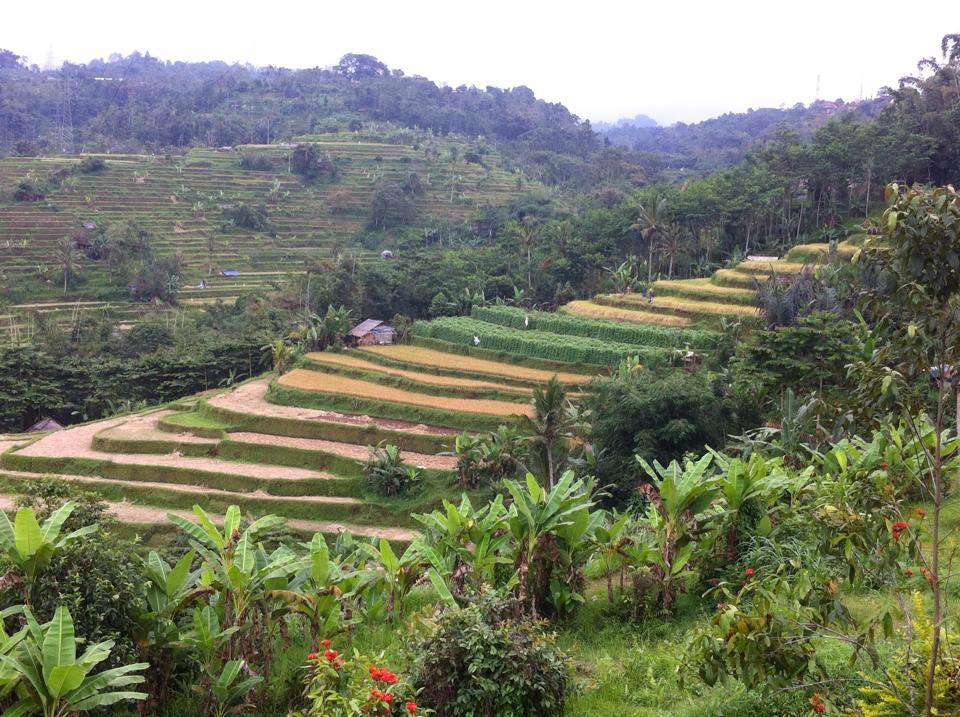 Tegalang Rice Terrace