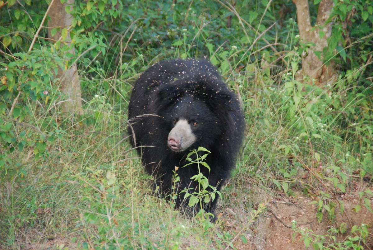 Agra Bear Rescue Facility (ABRF), Agra, India