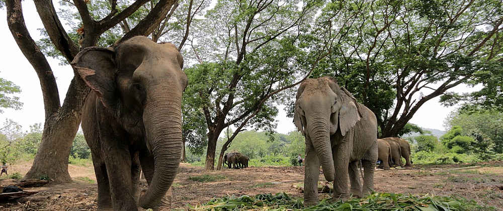 BLES Elephant Sanctuary
