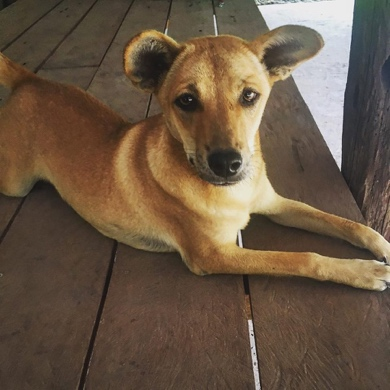 Volunteering with dogs at the Cambodia wildlife sanctuary