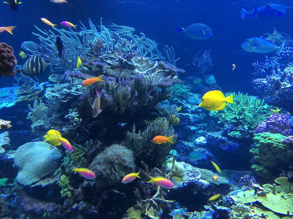 Coral Gardens, South Africa