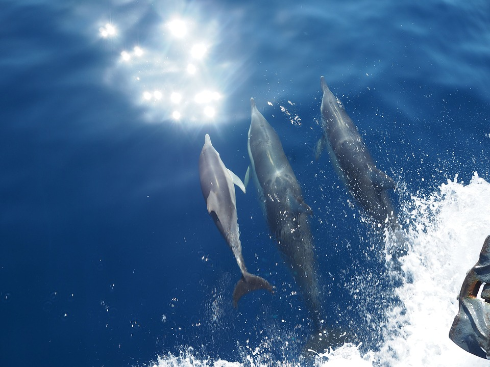 Italy dophins