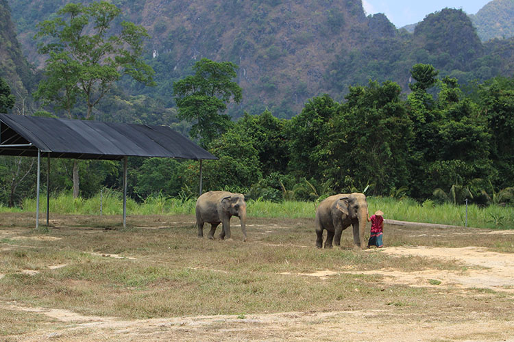 Interact Elephants in Thailand