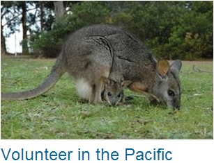 Volunteer in Pacific