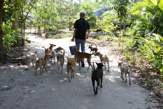 Soi Dog Foundation Thailand