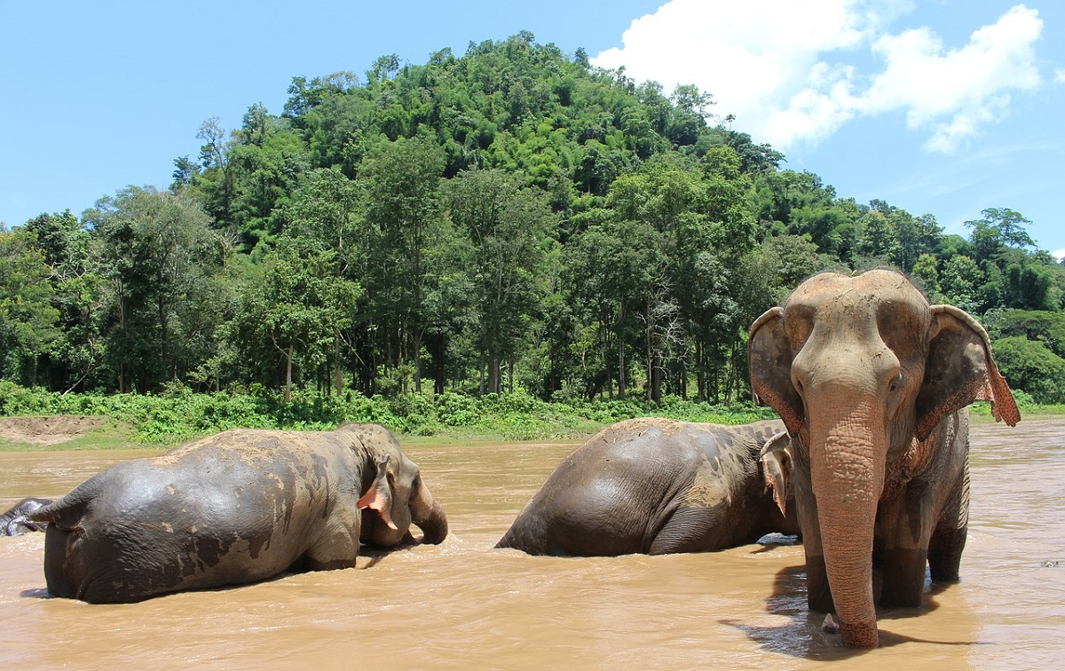 Summer travel ideas - elephants