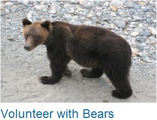 Volunteer Bears