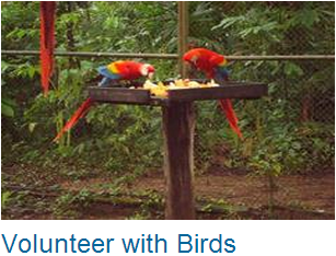 Volunteer Birds