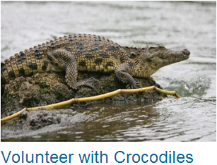 Volunteer Crocodiles