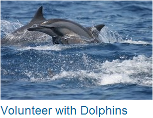Volunteer Dolphins