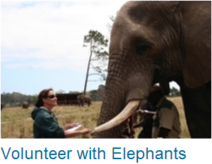 Volunteer Elephants