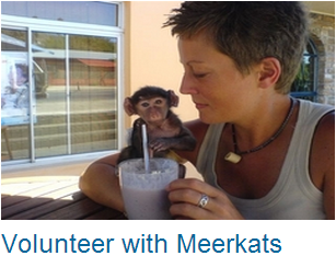 Volunteer Meerkats