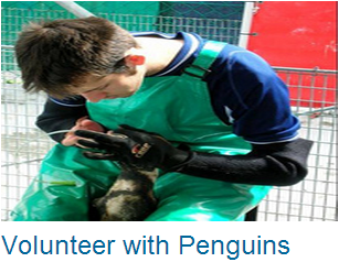 Volunteer Penguins