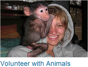 Volunteer Abroad with Wildlife